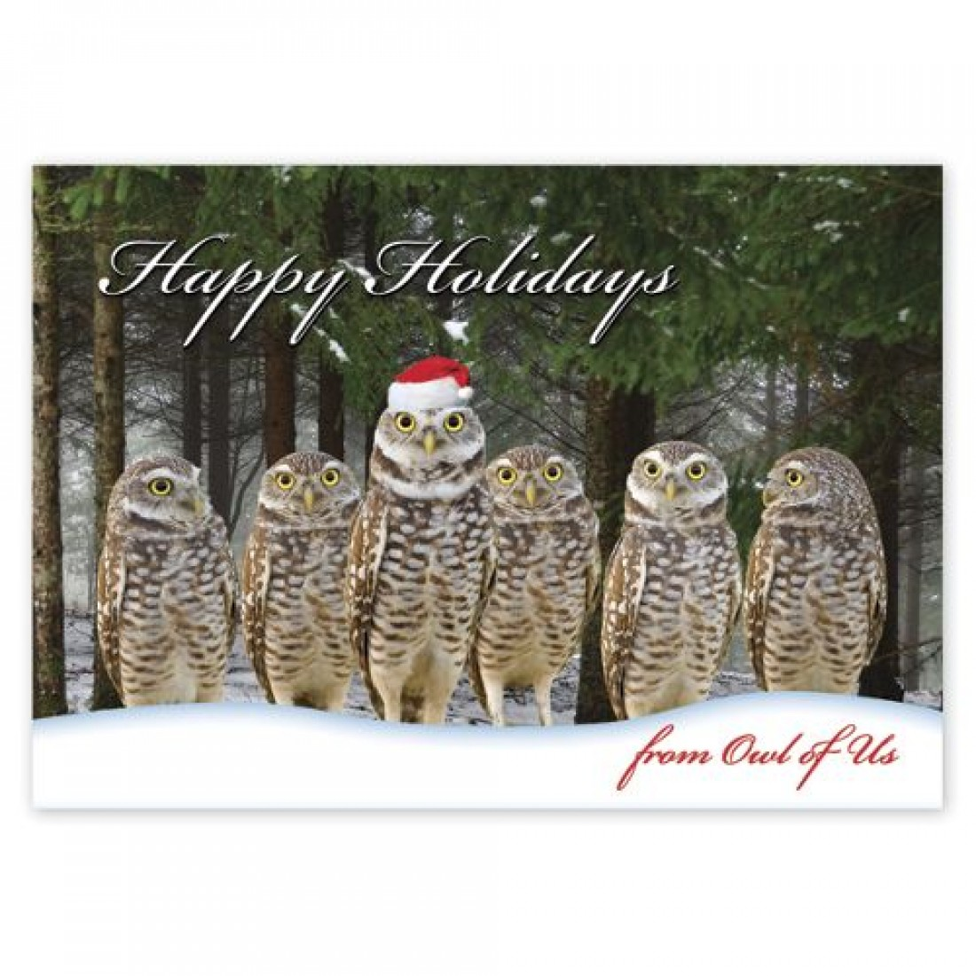 Owl of Us Christmas Cards HP14315 At Print EZ.