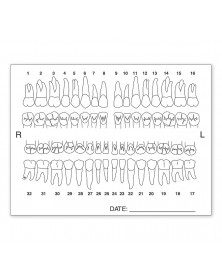 Tooth Chart Anatomy Labels