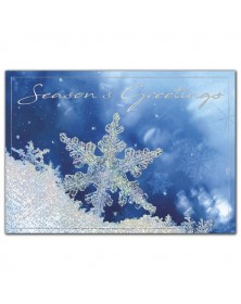 Frozen in Time Holiday Cards