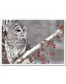 Winter Owl Holiday Cards